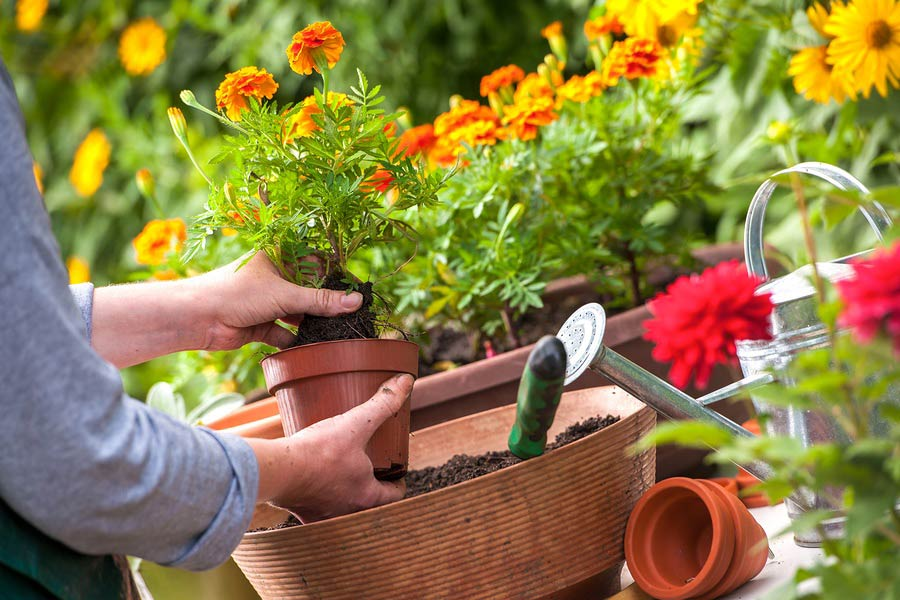 The Scoop on Potting Soil: Dos & Don'ts to Help Your Plants Thrive