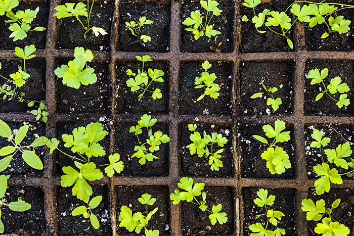 How to Transfer Starter Plants to Your Outdoor Garden