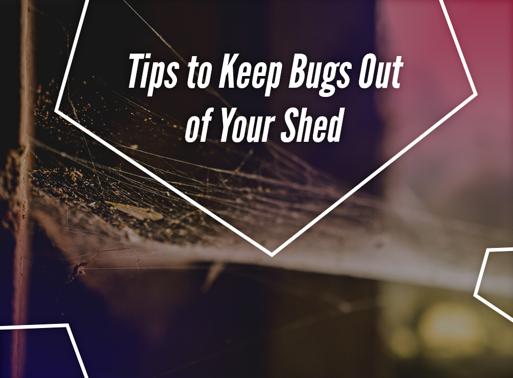 Tips to Keep Bugs Out of Your Shed