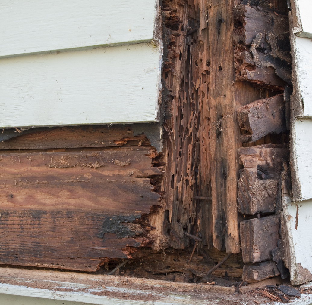 As Termites Spread Into Northern States, Termite-Resistant Products Become Crucial