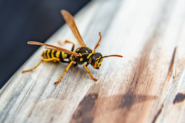 How to avoid bugs under siding
